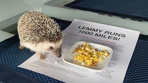 Lemmy Reaches 1000 Miles!