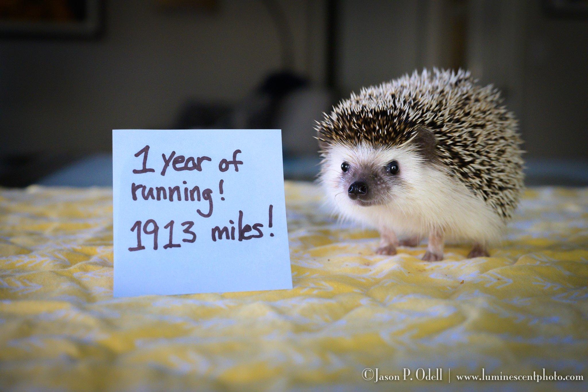 One Year of Running!