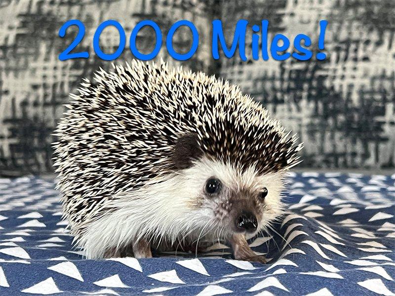 Lemmy Reaches 2000 Miles!